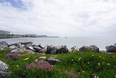 美丽的海滩花和植物有岩石的在开普敦,南 免版税库存照片