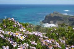 美丽的海滩花和植物有岩石的在开普敦,南 库存照片