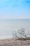 美丽的海滩马尔代夫的海岛 免版税图库摄影