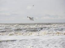 美丽的海滩11 免版税库存照片