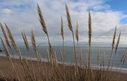 美丽的海滩- Tenby,威尔士,英国 免版税库存图片
