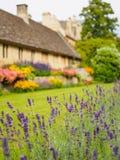 美丽的淡紫色在庭院里开花反对被弄脏的背景 库存图片