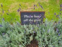 美丽的淡紫色花在庭院里 免版税库存照片