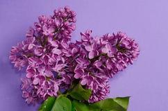 美丽的淡紫色花特写镜头照片  开花紫色弹簧 花卉季节性背景 库存图片
