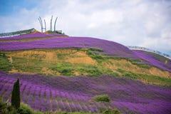 美丽的淡紫色领域公园 库存照片