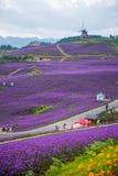 美丽的淡紫色主题乐园 库存照片