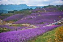 美丽的淡紫色主题乐园 库存图片
