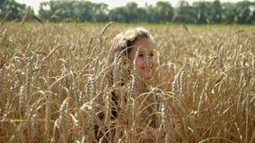 美丽的深色头发的女孩横跨金麦子的领域去 可爱的女孩使用与在领域的麦子耳朵 股票录像