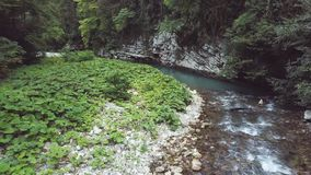 美丽的清楚的水在河在森林和狂放的自然使寄生虫视图环境美化 股票录像