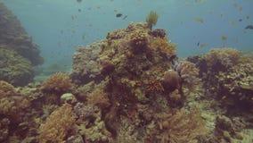 美丽的游泳在海水中视图的珊瑚礁和热带鱼 令人惊讶的珊瑚礁,seastar和鱼在海洋 股票视频