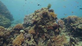 美丽的游泳在海水中视图的珊瑚礁和热带鱼 令人惊讶的珊瑚礁,seastar和鱼在海洋 股票录像