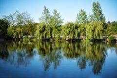 美丽的湖和一个绿色庭院有花和树的 外面,有鸟的一个公园和动物 水,迷人湖 f 免版税库存图片