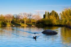 美丽的湖和两只鸭子在桑丹斯基 免版税库存照片