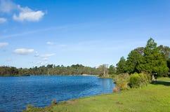 美丽的湖和环境美化的公园有草坪和树的 免版税库存图片