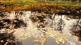 美丽的湖在有秋天五颜六色的叶子的森林里 股票录像