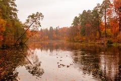 美丽的湖在有秋天树的一个森林里 库存照片