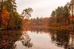 美丽的湖在有秋天树的一个森林里 图库摄影