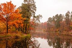 美丽的湖在有秋天树的一个森林里 免版税库存图片