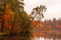 美丽的湖在有秋天树的一个森林里 免版税图库摄影