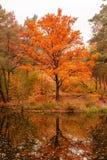 美丽的湖在有秋天树的一个森林里 库存图片