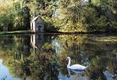 美丽的湖场面天鹅 免版税库存图片