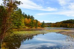 美丽的湖用浮动百合荚在秋天森林里 免版税库存图片