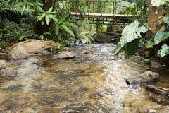 美丽的溪在国家清迈 免版税库存图片