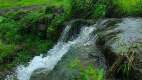 美丽的瀑布在马哈拉施特拉 免版税库存照片