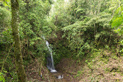 美丽的瀑布在绿色森林里在密林在热带巴厘岛,印度尼西亚 在巴厘岛北部 雨林场面 库存照片