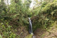 美丽的瀑布在绿色森林里在密林在热带巴厘岛,印度尼西亚 在巴厘岛北部 雨林场面 免版税库存图片