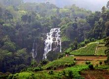 美丽的瀑布在以豪华的绿色植被为特色的丰盈斯里兰卡的埃拉地区 免版税库存图片