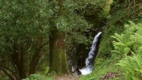 美丽的瀑布在Glendalough 股票录像