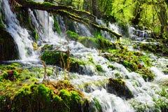 美丽的瀑布用在绿色森林中的透明的水 免版税库存图片