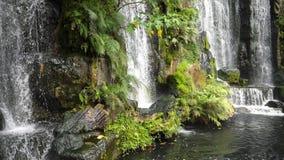 美丽的瀑布的风景本质在超级慢动作绿色植物叶子的和淡水筑成池塘 股票录像