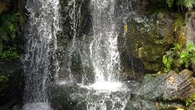 美丽的瀑布的风景本质在超级慢动作绿色植物叶子的 股票录像