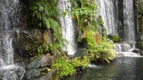 美丽的瀑布绿色植物叶子的风景本质和淡水筑成池塘 股票录像