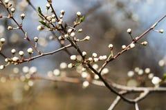 美丽的灌木 免版税库存图片