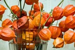 美丽的灯笼果桔子 免版税库存照片