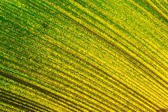 美丽的热带棕榈叶 免版税库存照片