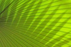 美丽的热带棕榈叶 免版税图库摄影