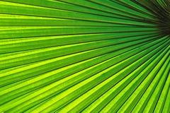 美丽的热带棕榈叶 免版税库存图片