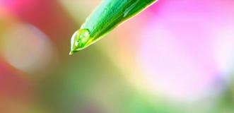 美丽的热带植物和水滴  库存图片