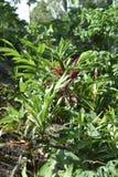 美丽的热带植物在一个热带密林 库存照片