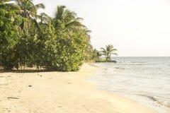 美丽的热带海滩岸在加勒比 免版税库存图片