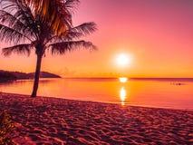 美丽的热带海滩海和海洋有可可椰子树的在 免版税库存照片