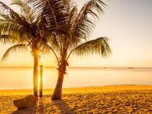 美丽的热带海滩海和海洋有可可椰子树的在 库存照片
