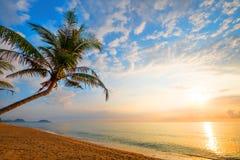 美丽的热带海滩海景与棕榈树的在日出 免版税库存照片