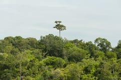 美丽的热带海滩和雨林在安达曼海,泰国 免版税库存图片