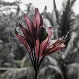 美丽的热带花在巴厘岛 免版税库存图片