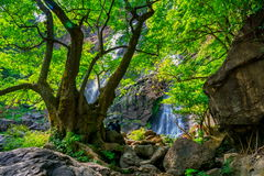 美丽的热带雨林和小河在深森林里, 免版税图库摄影